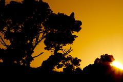 Sunshine (Davor Desancic) Tags: coyote sunset canon fremont hills 7d ebparksok