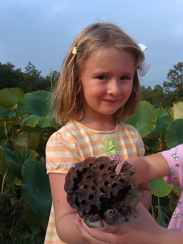 C7 and the Lotus seed pod