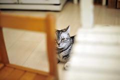 (命は美しい) Tags: cat cafe taiwan taipei 貓 coffeelab 咖啡實驗室 阿萬