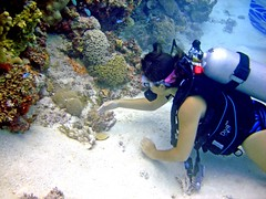 Touch The Sea (DivePhoto) Tags: coral scuba diver