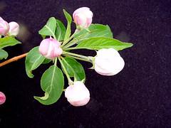 G.30 Flower Cluster