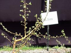 M.27 EMLA Tree