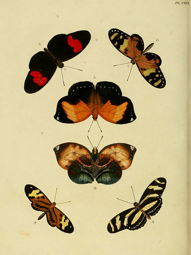 n339_w1150 by BioDivLibrary
