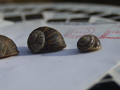 Snail and Mail (Rusty Marvin (Going around the pole)) Tags: greatbritain sun white 2004 table mail snail tiles envelope royalmail snails correspondence cepaeahortensis franked