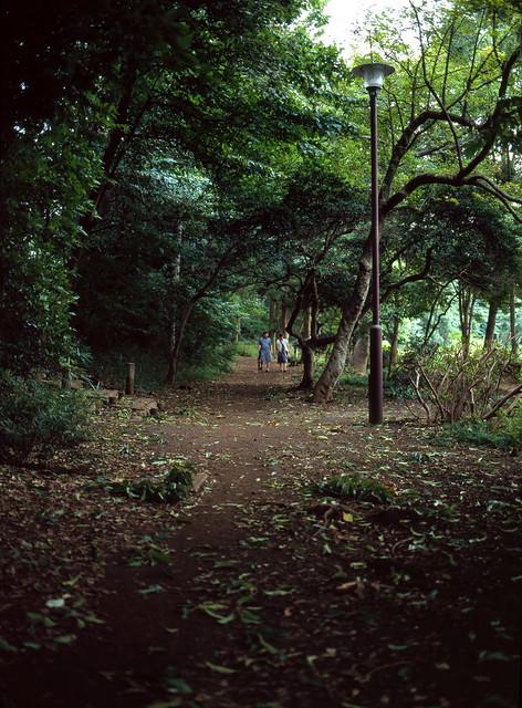 荒天の公園