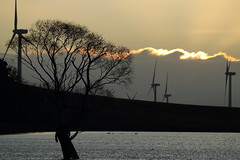 Towers at Sunset (blachswan) Tags: sunset tree water clouds australia victoria blackswan windtowers waubra waubrawindfarm