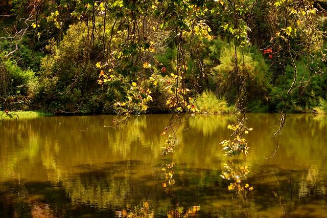 Golden water of Golden Gate Park
