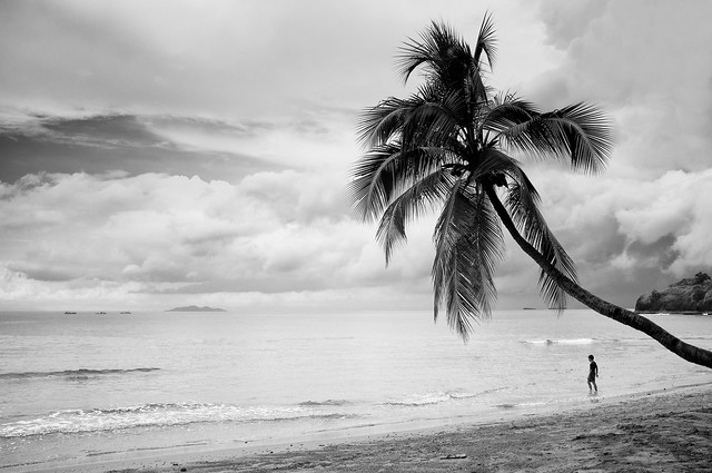 Coconut Tree and Boy