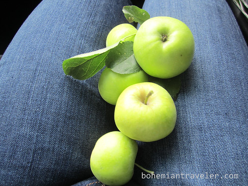 wild apples from national forest