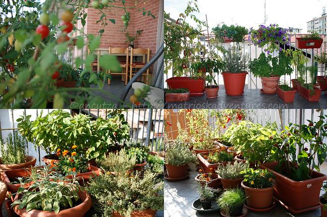 immagine foto orto sul balcone con erbe aromatiche, fiori e pomodori
