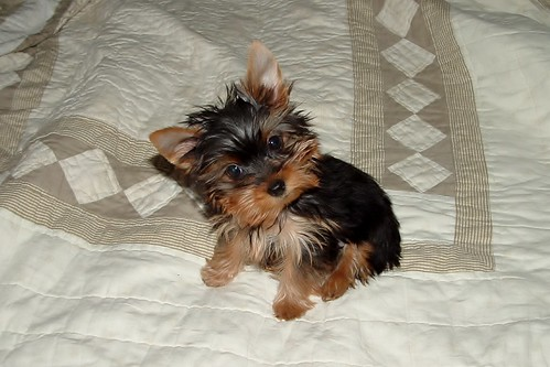 Lily As A Puppy