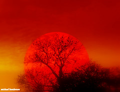 red sunseting over tree (coral.hen4800) Tags: trees sunset red sky sun tree yellow set sunrise gold golden rise wow1 wow2 wow3 wow4 wow5 wowhalloffame colorphotoaward artistoftheyearlevel3 flickrstruereflection3