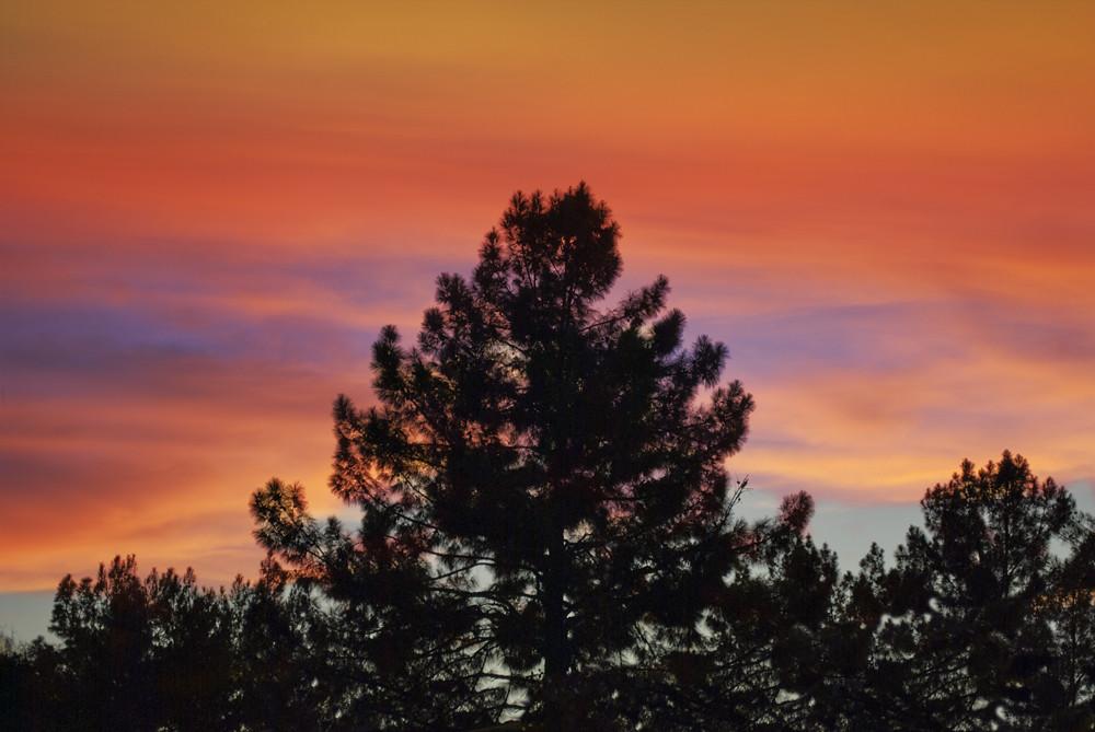 Tree Sky 4