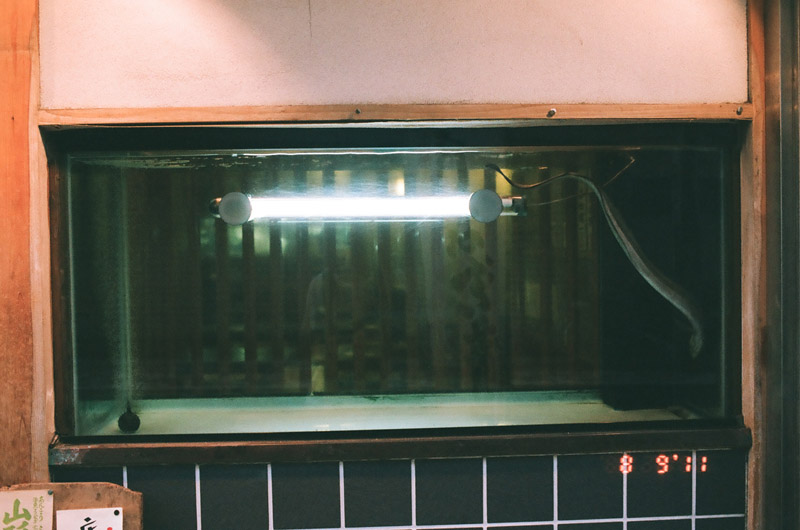 eel (11 of 11)