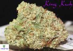 king kush Nug1 (Humboldt Relief) Tags: losangeles weed 420 pot marijuana herb cannabis ganja medicalmarijuana kush indica cannabisindica kingkush humboldtrelief medicalcannaibs