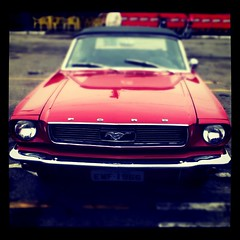 mustang (fffdesign) Tags: square squareformat iphoneography instagramapp xproii uploaded:by=instagram