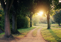 Path To Light (Philipp Klinger Photography) Tags: trees light sunset shadow summer sun sunlight tree green nature grass backlight river germany landscape deutschland gold golden evening back leaf nikon warm glow hessen counter path frankfurt natur august tele gras leafs philipp hesse hchst nidda counterlight klinger nikon18105mmvr d5100
