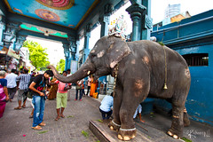 Got Blessing (cishore) Tags: india elephant club temple team tour blessing shack hyderabad cishore kishore members darshan pondicherry pondy darsh vinayak hws paradisebeach vinayakar nagarigari pondycherry puducherry wwwkishorencom 5dmk2 teamhws manakkula