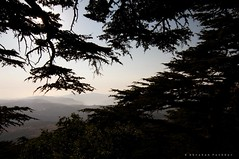 Valley of Cedars (puthoOr photOgraphy) Tags: lebanon beirut cedars liban lightroom shouf d90 adobelightroom bekkavalley nikond90 lubanan lightroom3 l alshouf puthoor gettyimagehq