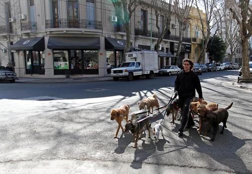 Dogwalker in Palermo Soho