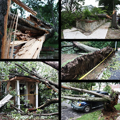 Aftermath of Irene (fahid chowdhury) Tags: nyc newyorkcity ny nature rain weather aftermath branches queens jamaica torn irene strom fallentrees 2011 hurricaneirene