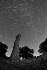 They Kill Good Trees To Make Bad Newspapers ([Nocturne]) Tags: longexposure nightphotography trees blackandwhite lightpainting field stars woods cheshire deadtree nocturne startrails earthandspace wwwnoctographycouk competition:astrophoto=2013