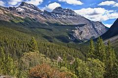 Canadian Rockies. (dicktay2000) Tags: mountain canada rockies alberta scape richardtaylor 20080911img05171