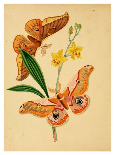 008-The cabinet of oriental entomology…1848- John Obadiah Westwood