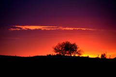 Somewhere in Saskatchewan (Bracus Triticum) Tags: sunrise saskatchewan somewhere