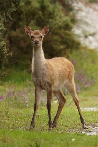 Fuzzy Fawn by julian sawyer