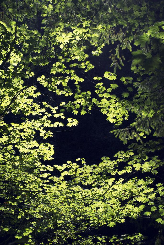 Sunlit Tree Canopy