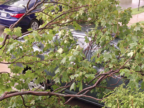 tree branches cover yard and car 7