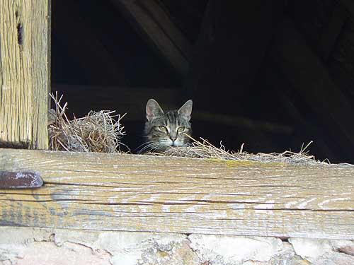 petit chat.jpg