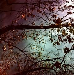 (bill bold II) Tags: london infrared homedeveloped yashicamat124 naturepoetry kodakaerochrome
