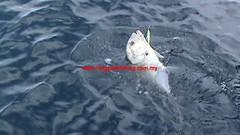 20100718 (fymac@live.com) Tags: mackerel fishing redsnapper shimano pancing angling daiwa tenggiri sarawaktourism sarawakfishing malaysiafishing borneotour malaysiaangling jiggingmaster