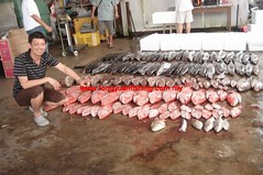 20100848 (fymac@live.com) Tags: mackerel fishing redsnapper shimano pancing angling daiwa tenggiri sarawaktourism sarawakfishing malaysiafishing borneotour malaysiaangling jiggingmaster