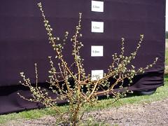 V.1 Tree