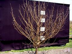 MM.111 EMLA Tree