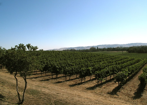 Vineyards at Gundlach Bundschu Winery