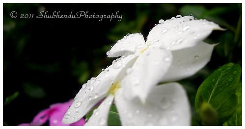 DSCN0705 by ShubhenduPhotography