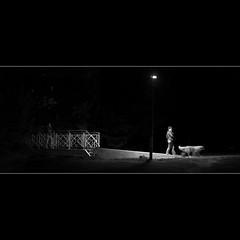 Nuit canine