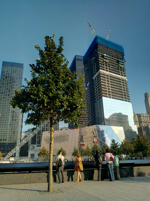 Swamp White Oak & 4WTC