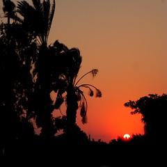 Sun Set in Ismailia (Mohamed Abdel Samad) Tags: sunset egypt palmtree ismailia doubleniceshot mygearandme mygearandmepremium mygearandmebronze mygearandmesilver