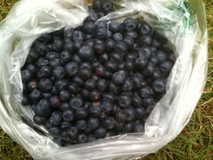 Blueberries!!!