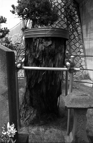 稲荷木一本松