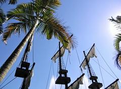 Pirata (Ricardo Venerando) Tags: park blue nature brasil olympus explore pirate tropical abc discovery nationalgeografic platinumphoto abcpaulista diamondclassphotographer ysplix grandeabc goldstaraward