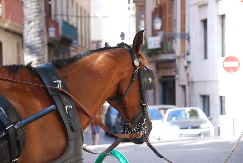 Mallorca 2011, Palma