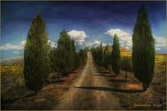 ...Crete Senesi  4........ (leon.calmo) Tags: canon siena toscana colline cretesenesi eos50d leoncalmo mygearandme