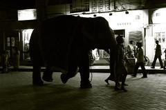 Street Walk - Elephant