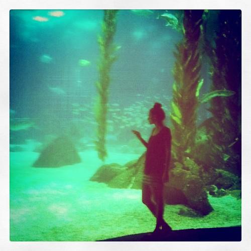 Quero um aquário desse